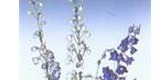 Israel Flower